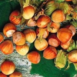 Лесного ореха (фундука)...