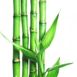 Бамбуку екстракт-концентрат
