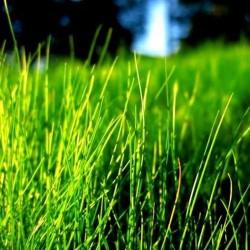 Зелена трава запашка