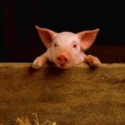 Плаценти (свин.) гідролізат