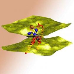 Мембранно-липидный комплекс