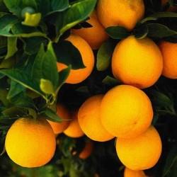 Апельсина пудра