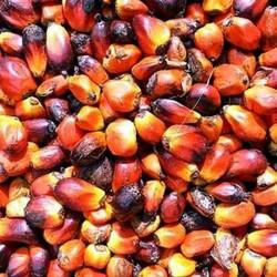 Пальмоядрова олія РДВ