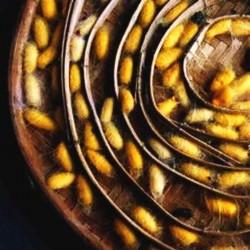 Шелка протеинов гидролизат